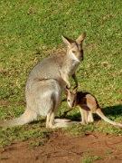 Carnarvon Gorge to Brisbane